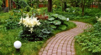 What to plant along walkway