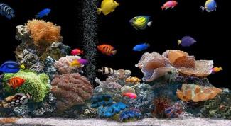 Почему дохнут рыбки в аквариуме
