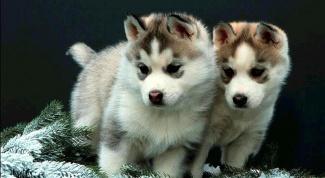 Как выбрать щенка