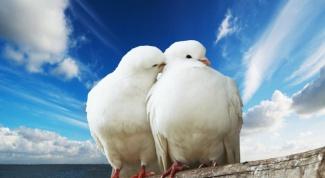 Какие породы голубей существуют