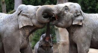 Какие животные водятся в тропиках