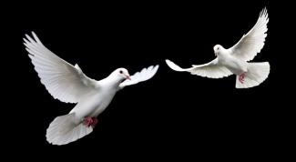 Почему залетевшая в дом птица считается плохой приметой