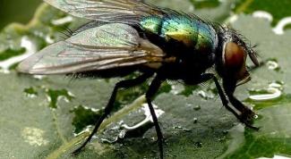 Где зимуют мухи