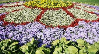 Какие многолетние долгоцветущие растения посадить на даче