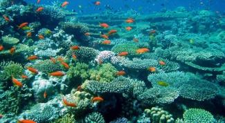 Где Красное море