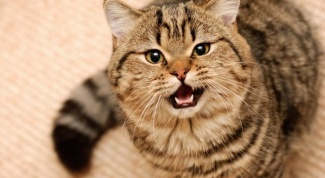 Why neutered cats