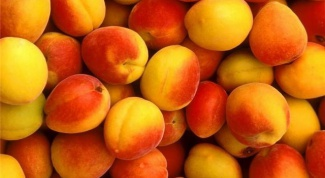 What age can I give baby apricot