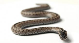 Что символизирует змея
