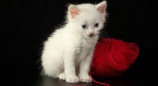 Можно ли держать в доме кошку при беременности