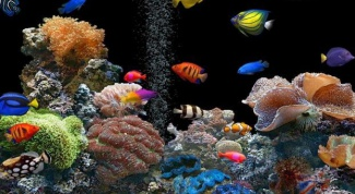 Вреден ли аквариум в спальне