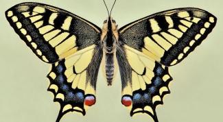 Где зимуют бабочки