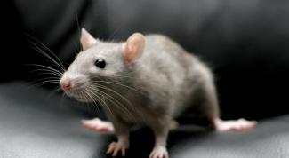 Почему женщины боятся мышей