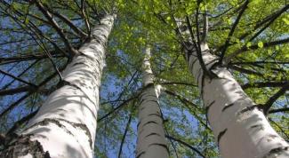 Какие есть загадки про деревья