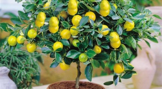 What can be grown from fruit pits