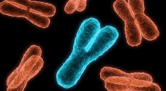 Как передается ген дистрофии Дюшена