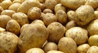 Как выбирать семенной картофель