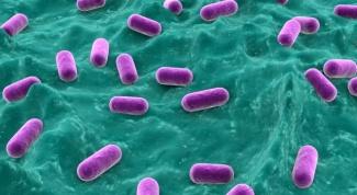 How to choose probiotics