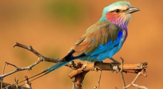 Как победить страх перед птицами