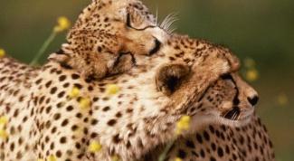 Испытывают ли животные настоящую любовь
