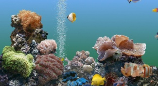 Мешает ли аквариумным рыбкам шум аэратора