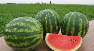 How to determine the ripeness of watermelon in the garden