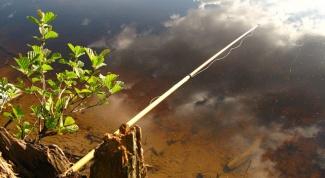 Почему рыба клюет лучше после дождя