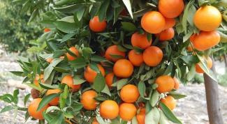 Сколько кальция в цитрусовых