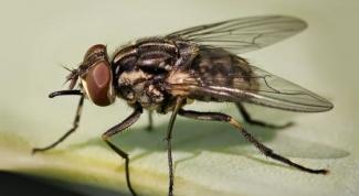 Как вывести опарышей и мух в частном секторе