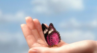 How to breed butterflies at home