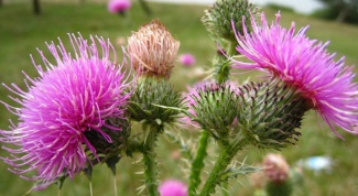 How to take milk Thistle oil