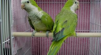 Как приручить птиц садиться в клетку