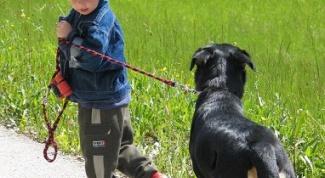 Какое животное завести с маленьким ребенком