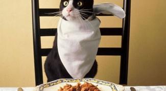 Какие корма для котов относятся к классу премиум
