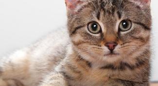 Что любят кошки
