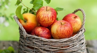 Какие яблоки самые полезные