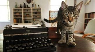 Каких кошек называют
