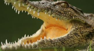 Зачем заводят крокодилов