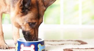 Можно ли кормить собак кошачьим кормом