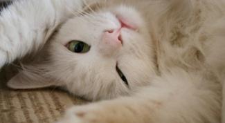 Хотят ли стерилизованные кошки кота
