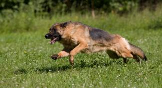 Мифы о дрессировке собак