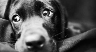 Основное заблуждение владельцев собак
