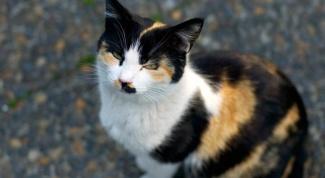 Почему кошки бывают трёхцветные , а коты нет?