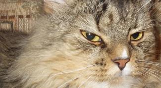 Как воспитать вежливого и добродушного кота