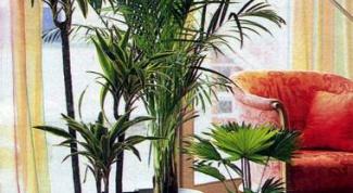 Правила полива домашних растений