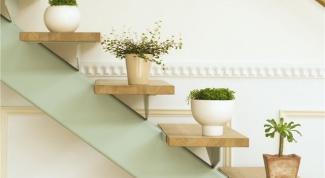 Как нельзя поливать комнатные растения