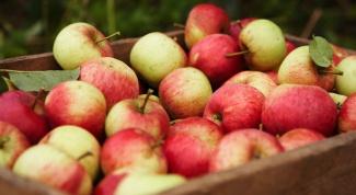 Как делать домашнее спиртное из  яблок