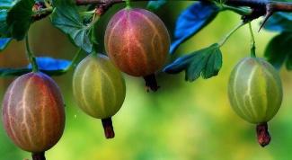 Как вырастить ягодные деревья