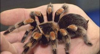 Как ухаживать за пауками
