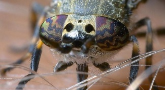 How to cure the bite of a gadfly