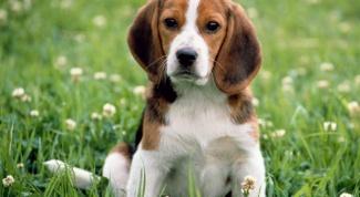 Какого щенка подарить охотнику